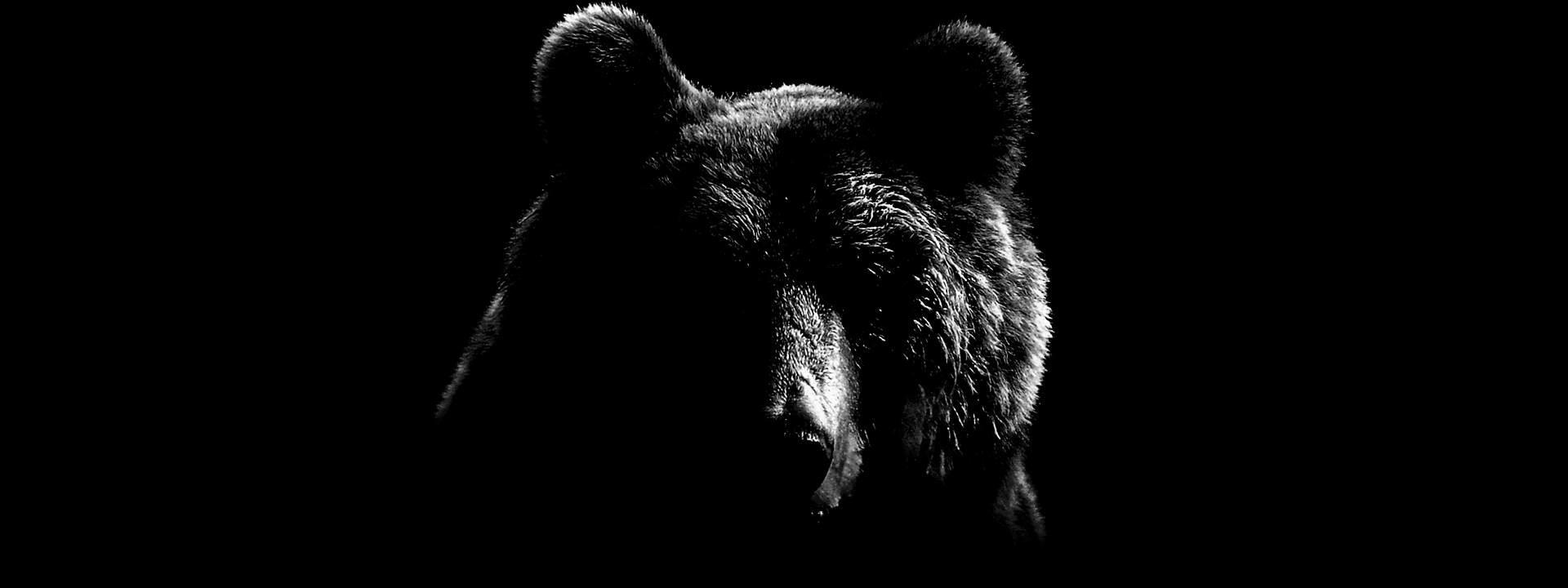 Silhouette of the VCCP Bear