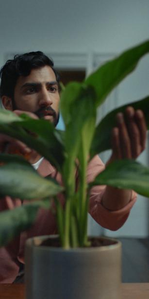 A man tending to a houseplant